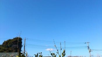 青い空'12.1.29.JPG